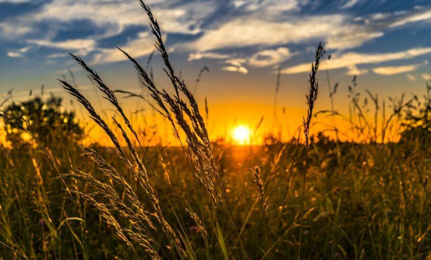 ¿Qué es la agricultura sostenible?